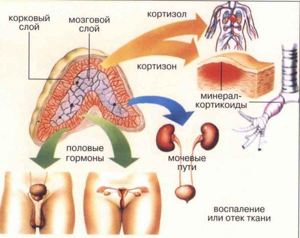 гормоны стресса и их психотропный эффект