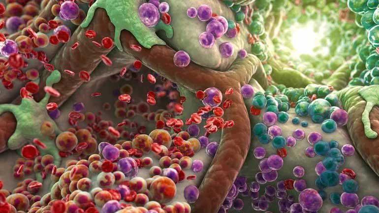 Какие фрукты выводят токсины из организма